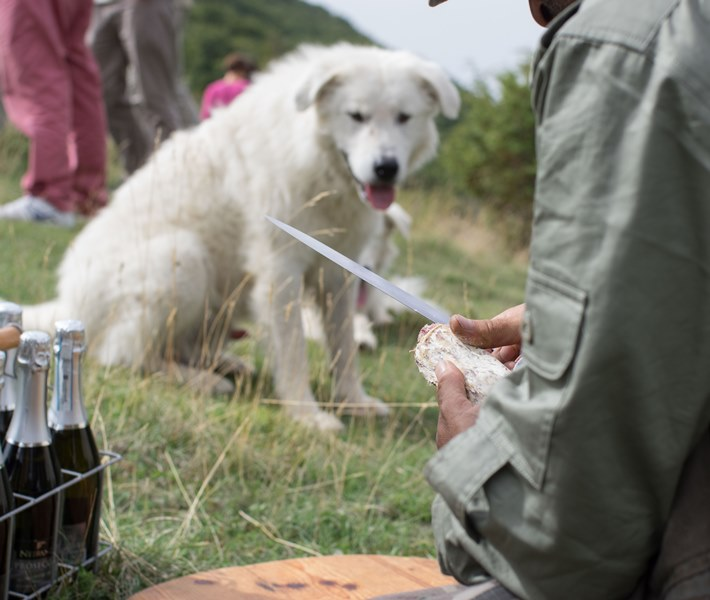 Picnic during Wild Foods Truffle Hunt