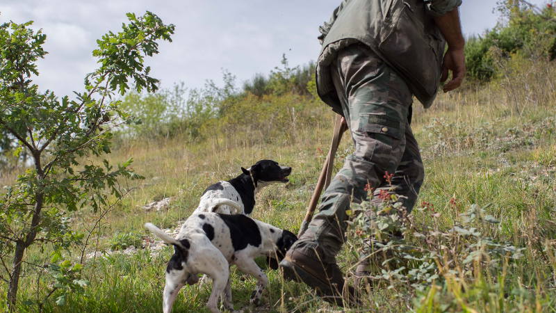 Wild Foods Truffle Hunter Umbria