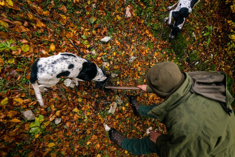 Wild Foods Italy Truffle Hunting Dogs